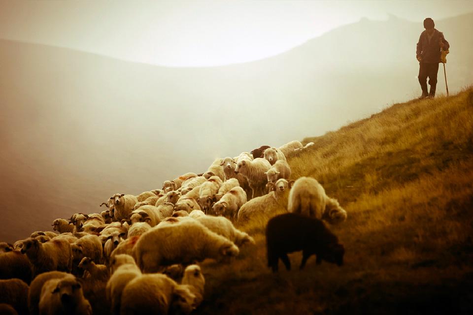 Cuidando dos Pastores